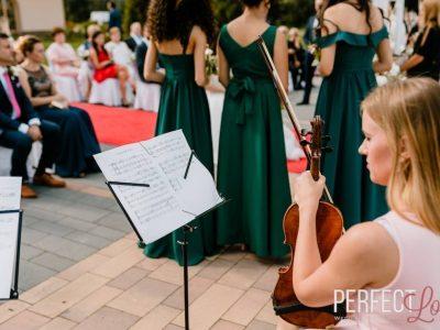 violin (13)